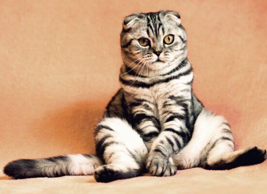 Wieso Katzenvideos politisch sind